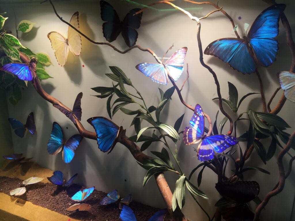 Mariposas metalizadas copia