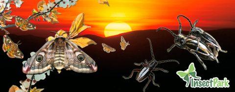 21-04-2017: Excursión a la Sierra Norte: Atracción sexual de mariposas y escarabajos alpinos