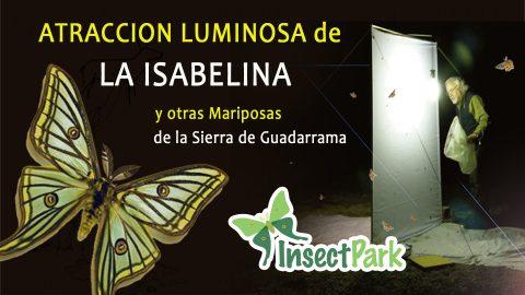 10 y 17 de junio: ¡Últimas salidas nocturnas para ver la Mariposa Isabelina!
