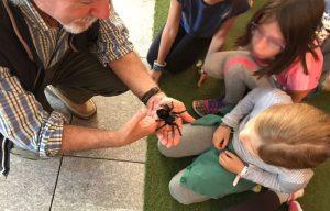 Taller Toca-Toca en InsectPark