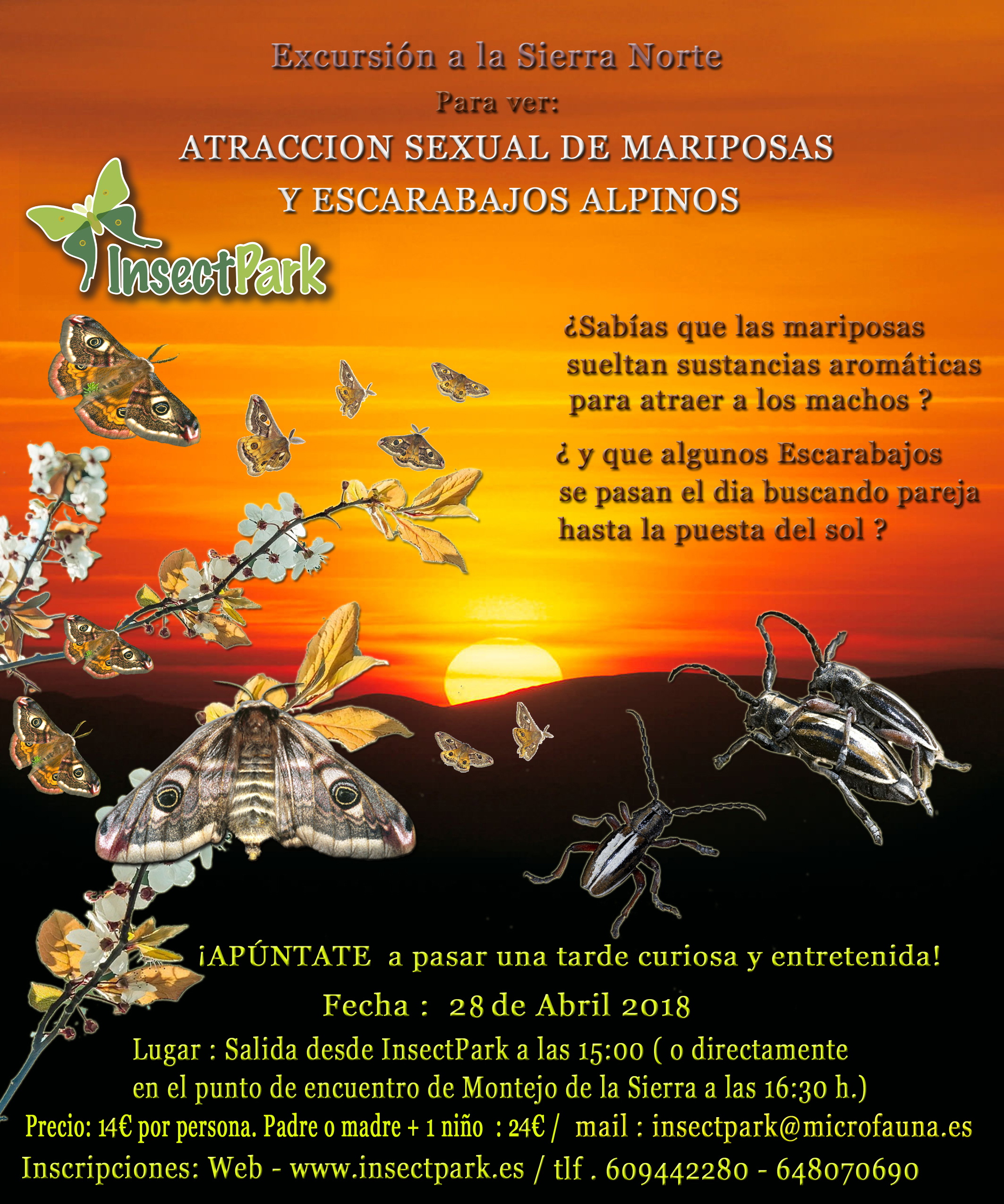 excursion atraccion mariposas