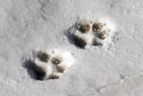 "Febrero| Taller ""Rastros Animales"""