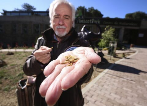 Entomofagia: degustación de insectos comestibles