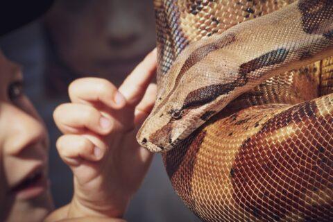 ¡Nuevo! Contacto con Reptiles