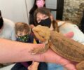 Agosto | Encuentro con reptiles