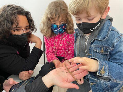 Abril | Mira y siente los insectos