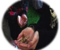 Marzo | Mira y siente los insectos