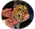 Marzo | Encuentro con reptiles